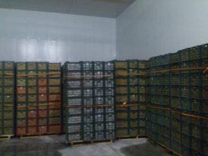 تصویر نصب ساندویچ پانل سردخانه 20000 تنی 43